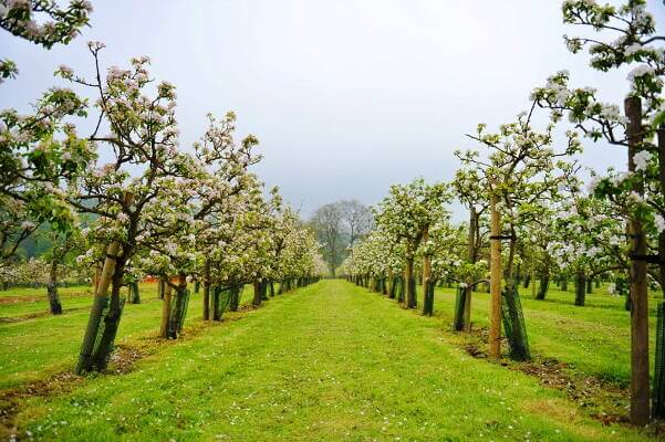 A megoldás a kisgépes fűnyírás, gazvágás, parlagfű irtás itt: Gyümölcsös, szőlő, parlagon fekvő terület.