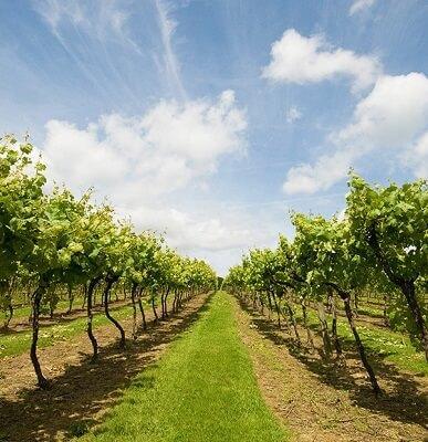 Csökkenő erózió a fűnyírással, gazvágással, parlagfű irtással a gyümölcsösben, szőlőben.
